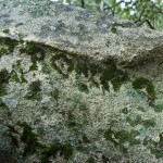ok_cardiccia_dolmen_02