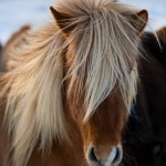 ok_chevaux_02