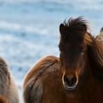 ok_chevaux_04