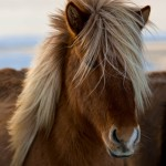ok_chevaux_05