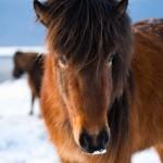 ok_chevaux_06